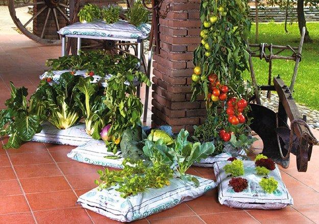 pomidory i zioła na balkonie
