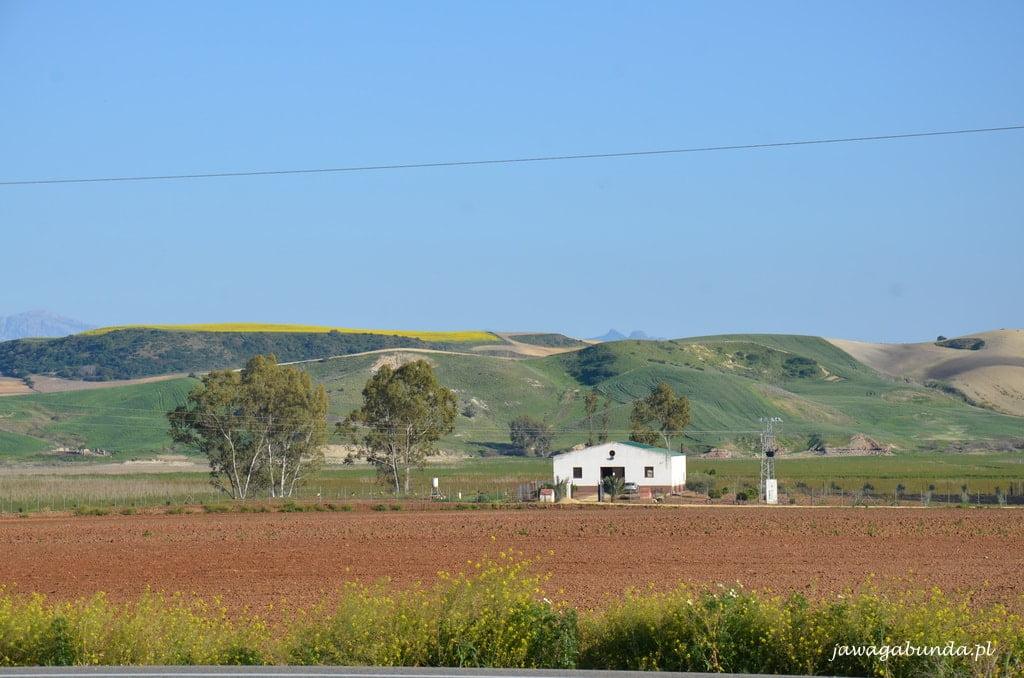 widok na pola i odległe góry
