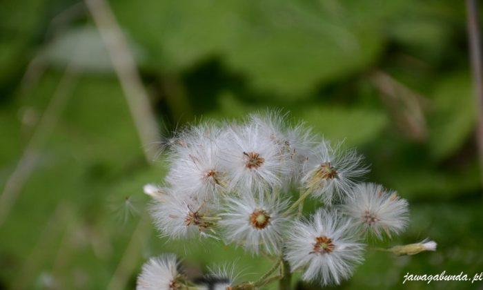 przyroda na wiosnę