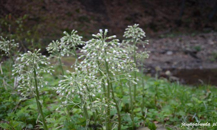 kwiatki o białych gałązkach