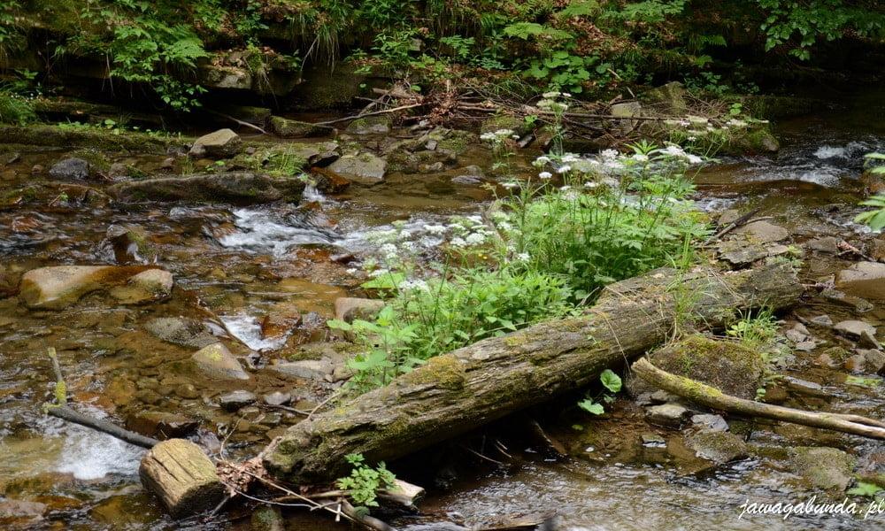 potok w górach mnóstwo zieleni wokół