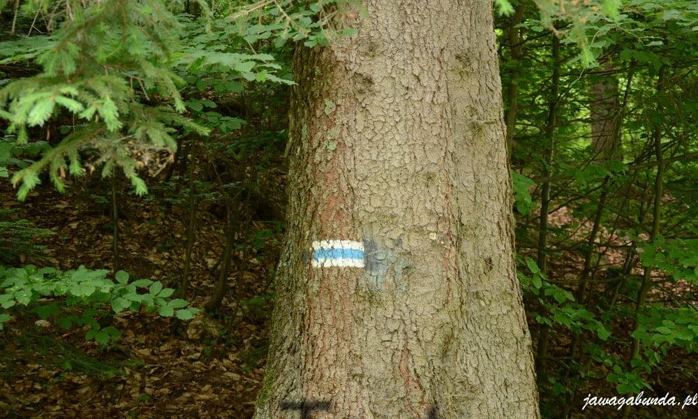 dwa biele paski a między nimi niebieski namalowane na drzewie - oznaczenie szlaku turystycznego