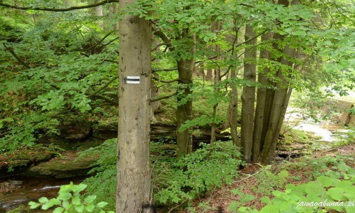 szlak na drzewie