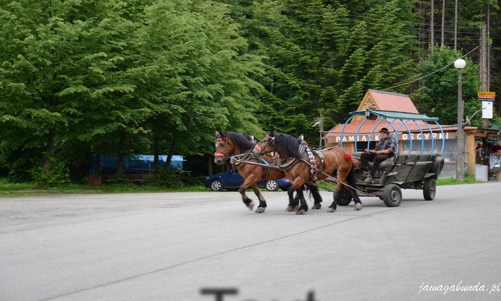 bryczka, dwa konie i woźnica na górskiej drodze