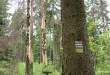 oznaczenie szlaku w górach: dwa poziome białe paski a w środku kolor:czerwony, żółty, zielony, żółty lub czarny