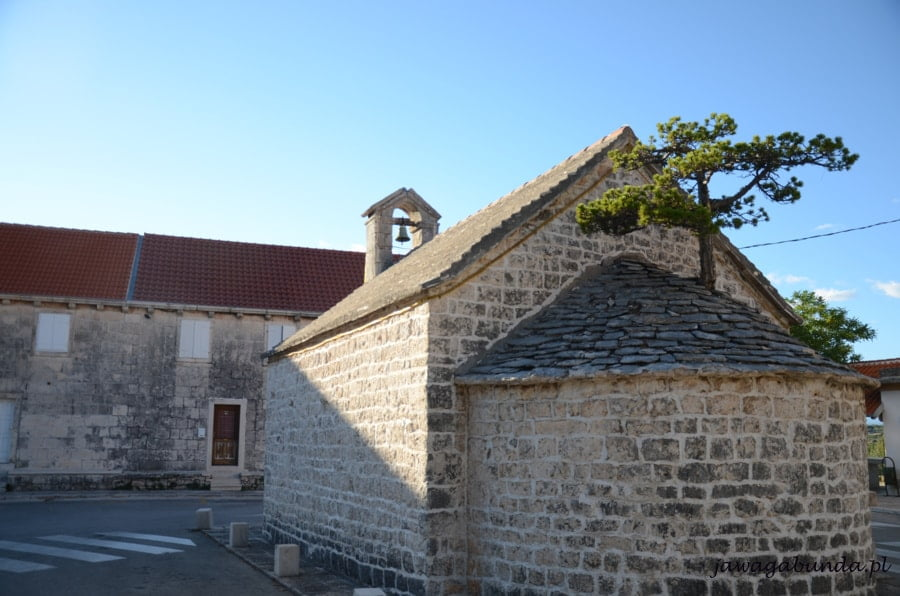 sosna rosnąca na dachu kościoła