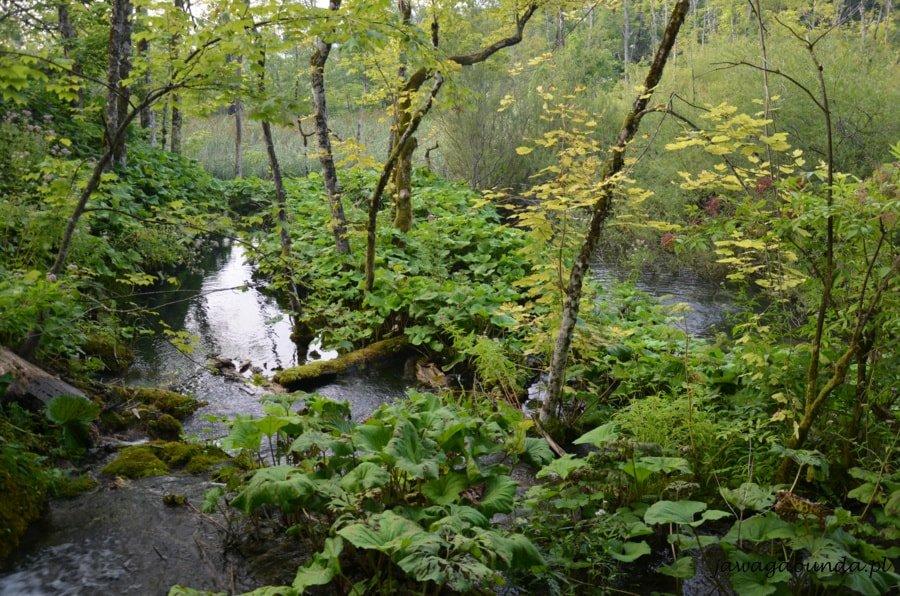 zieleń i jeziora