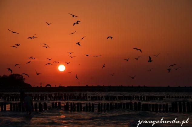 fruwające nad morzem przy zachodzie słońca