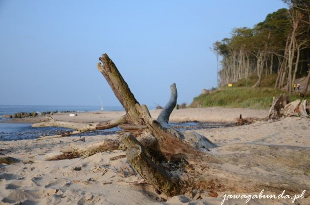 korzeń leżący na plaży