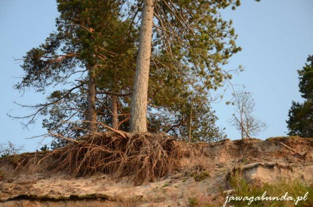 Ustka - wydmy rośliny rosnące na wydmach