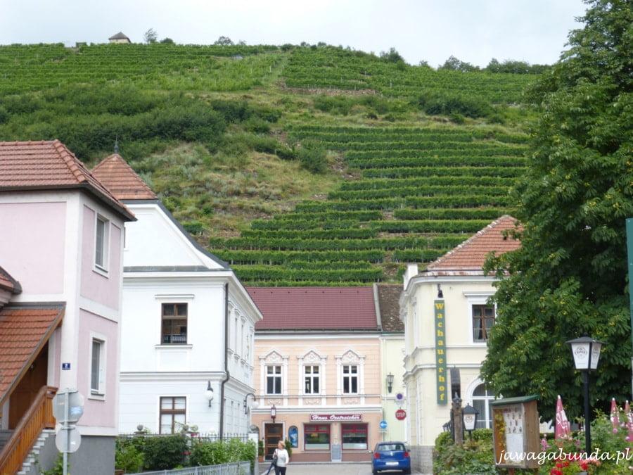 winnice nad domami