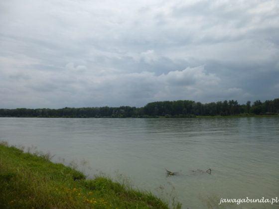 wzburzony Dunaj