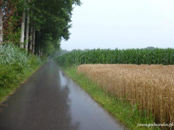 droga, las i zboże w strugach deszczu
