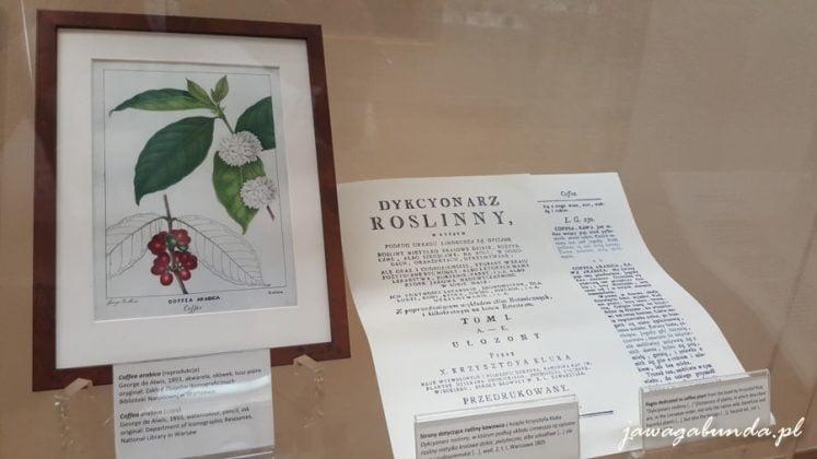 opis rośliny - kawy