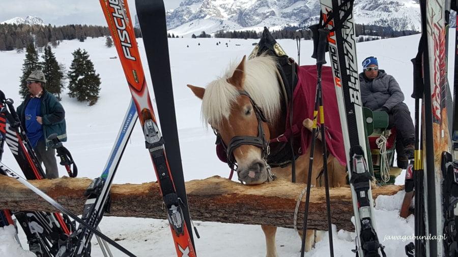 koń zjada drewnianą deskę