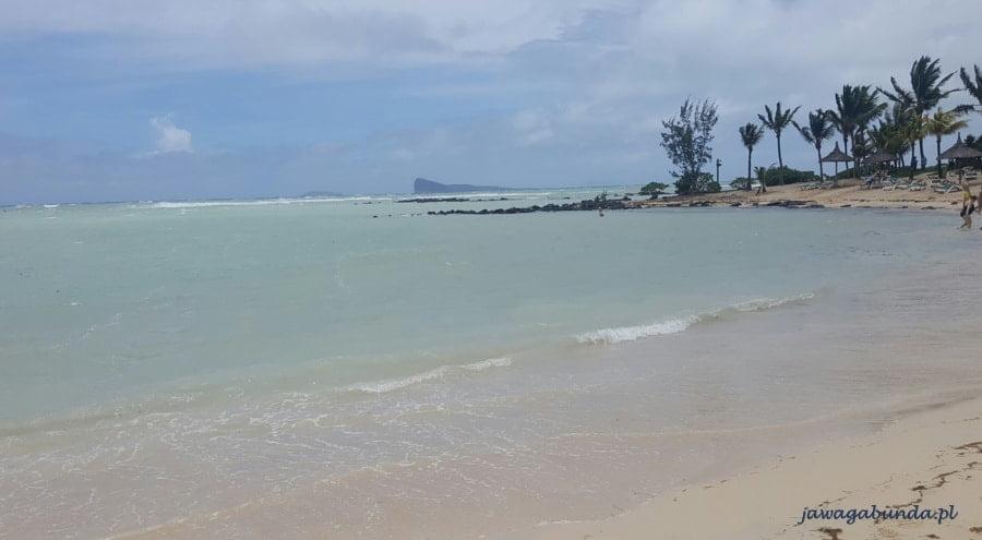 plaża ocean i palmy