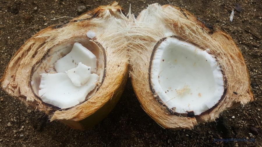 owoc kokosa rozłupany na pół