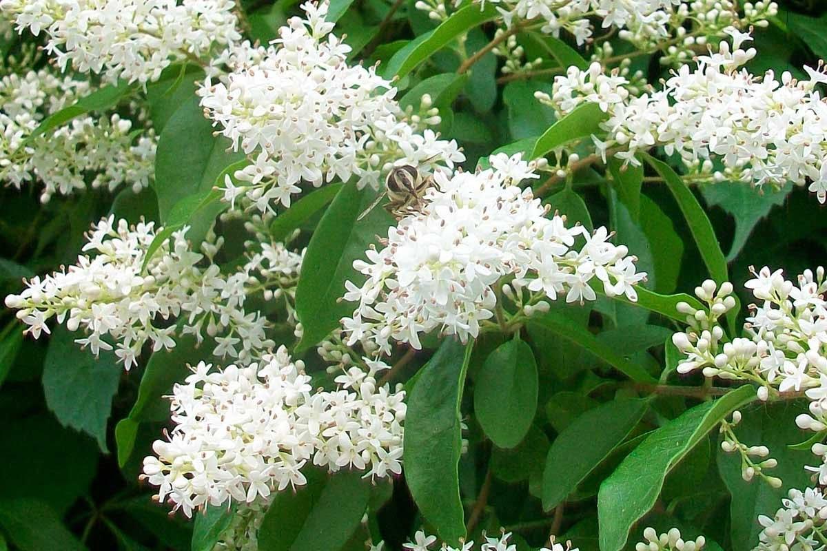 kwitnący na biało kwiat