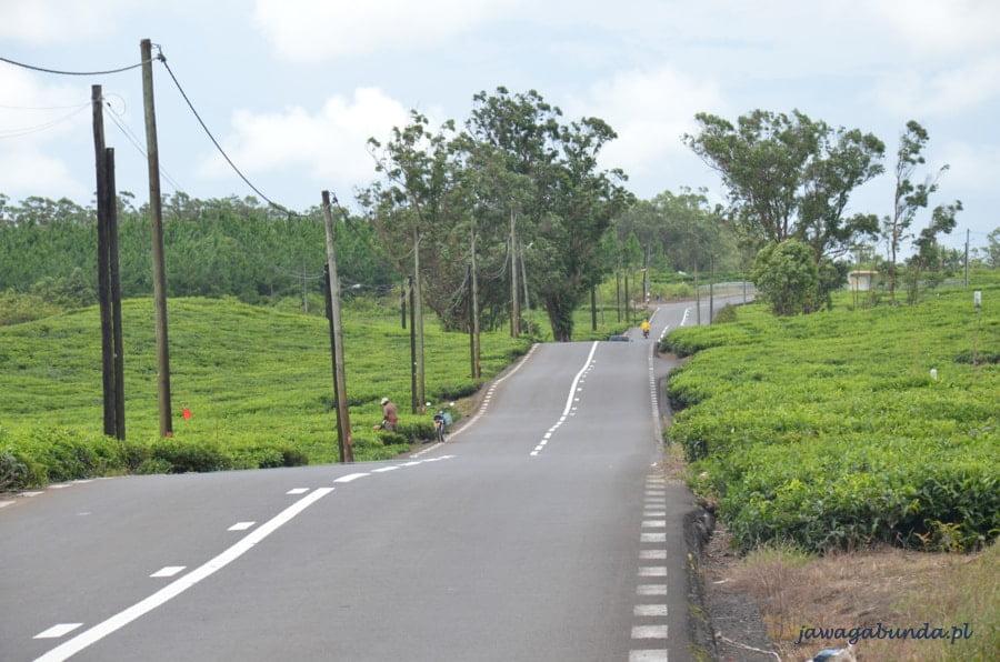 droga biegnąca wzdłuż zielonych pól