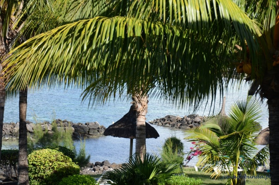ocean i palmy
