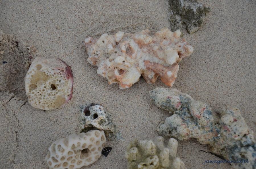 kawałki rafy koralowej leżące na plaży