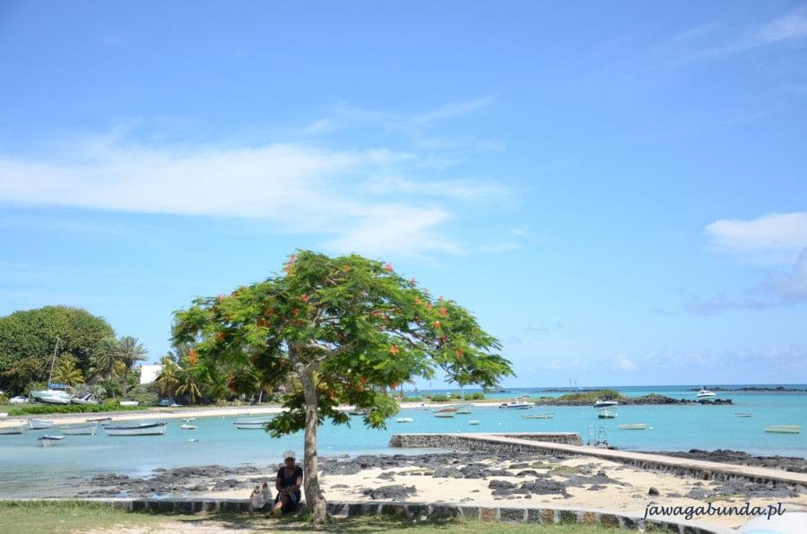 drzewo na tle niebieskiego oceanu