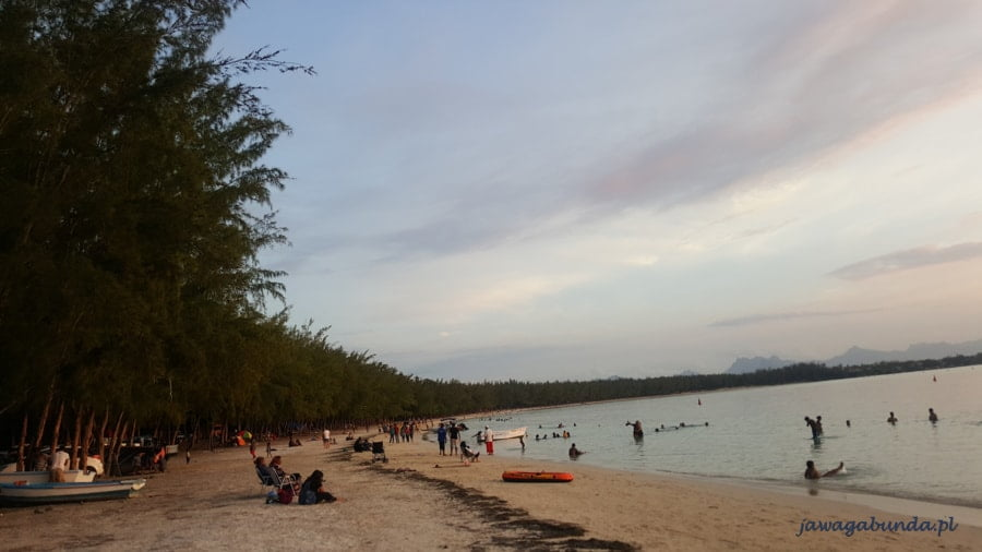 plaża porośnięta drzewami z ludźmi w morzu