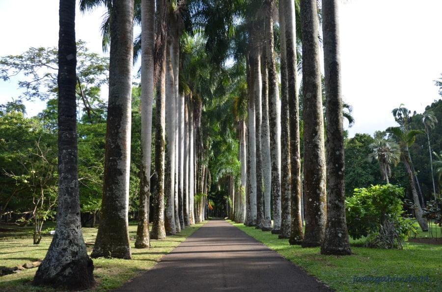 aleja palmowa