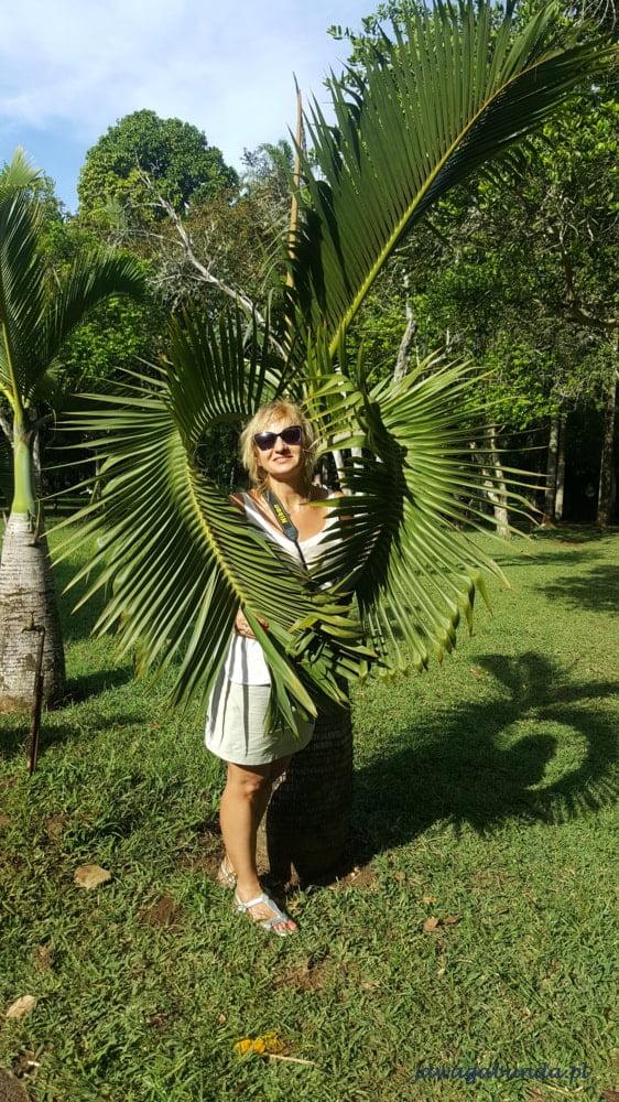 Mauritius - kobieta otoczona liśćmi plamy w kształcie serca