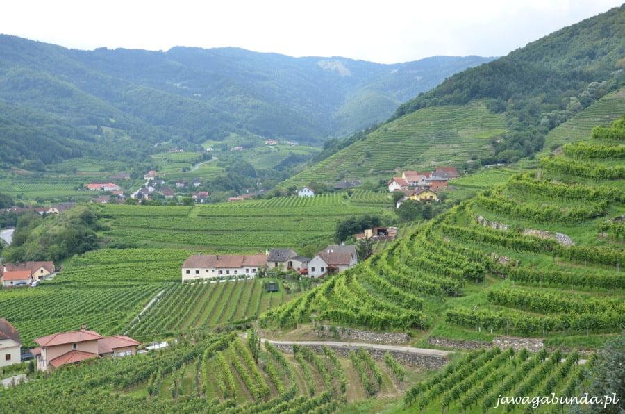 wzgórza porośnięte winoroślami