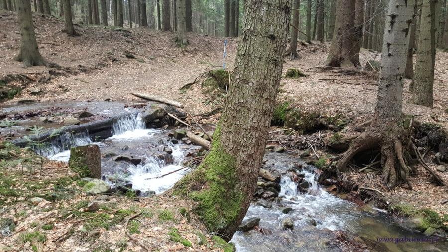 potok i kawałek pnia