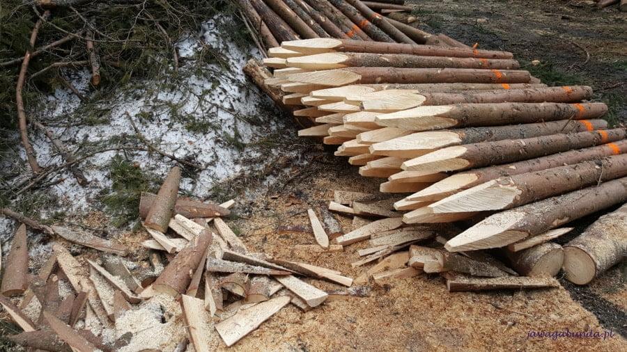 drewno zaostrzone przygotowane do wywózki