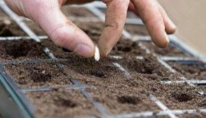 dłon z nasionem i ziemia w donu=icy