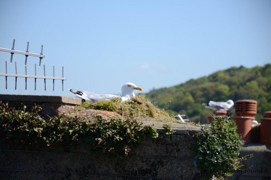 ptak wysiadujący jaja na dachu domu