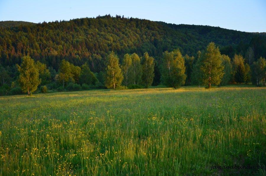 zielona kwitnąca na kolorowo łąka