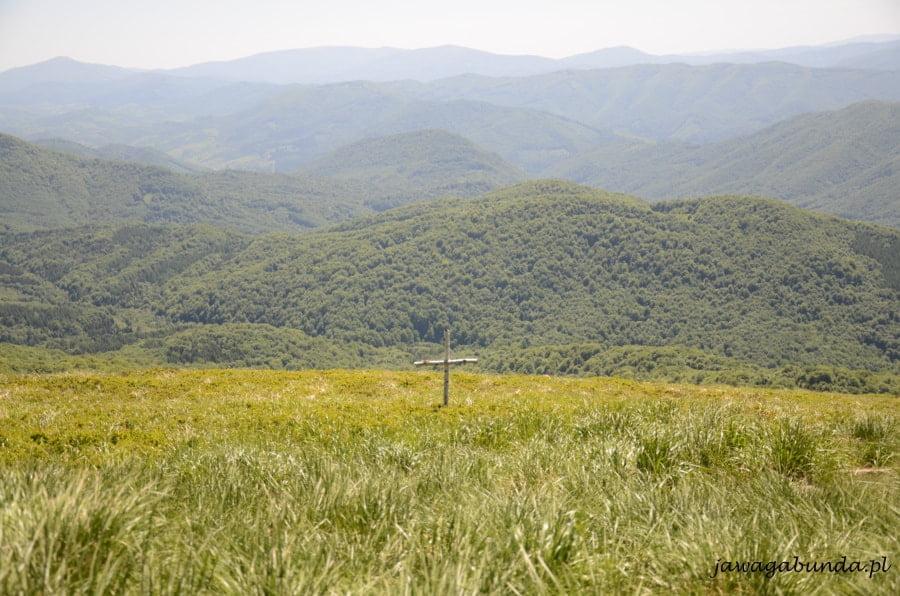 Drewniany krzyż wśród krzaków borówek