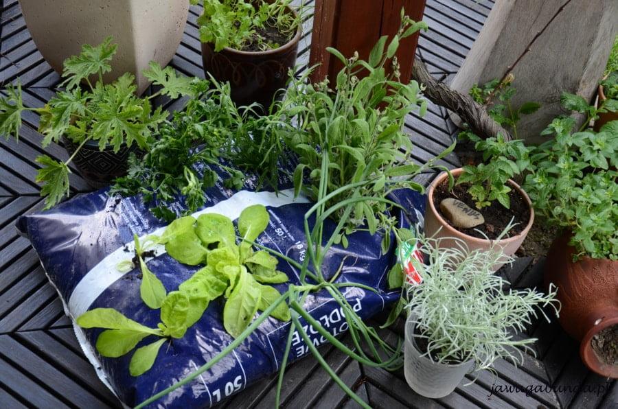 warzywa i zioła w plastikowym worku na balkonie