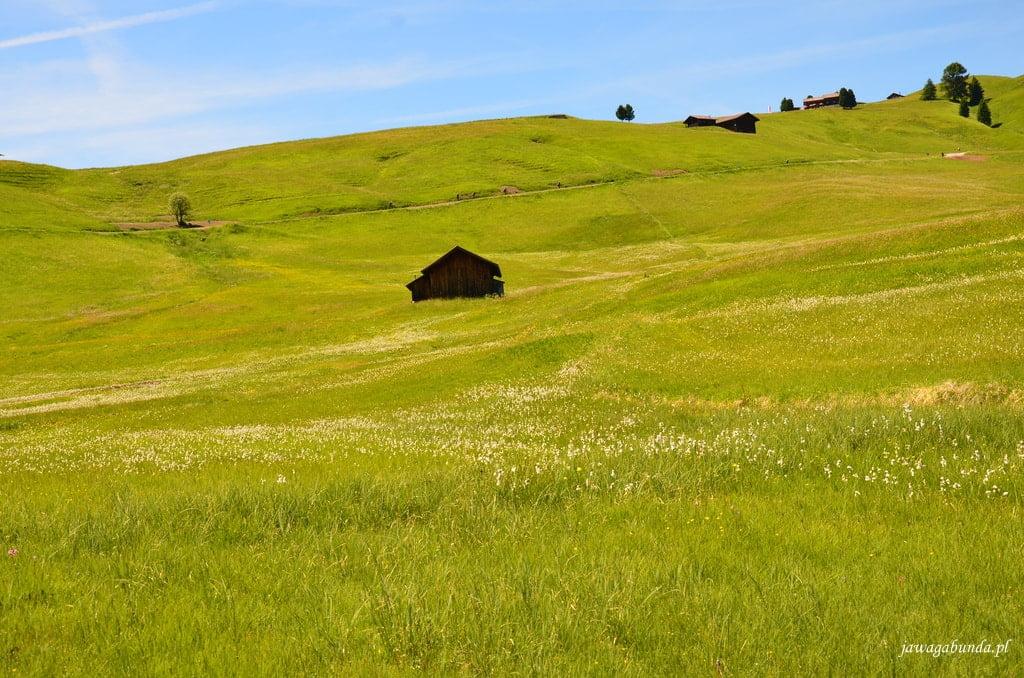 żółta łąka w górch