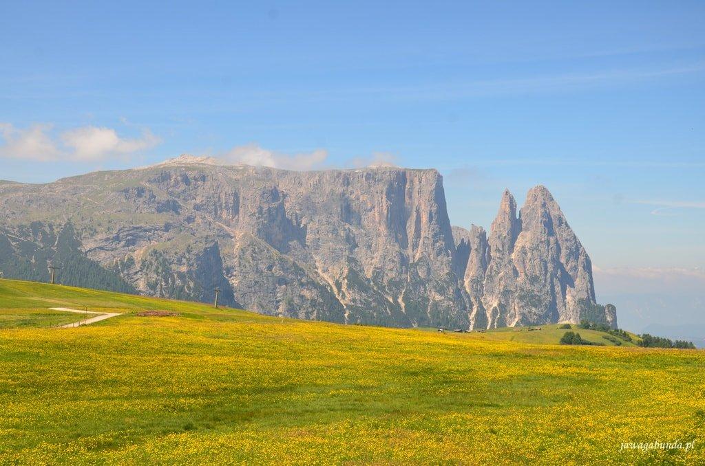 żółta łąka i góry