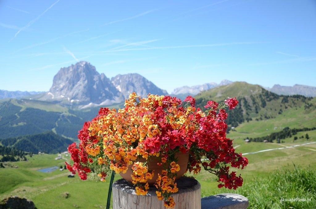 kosz z kolorowymi kwiatami na pierwszym planie
