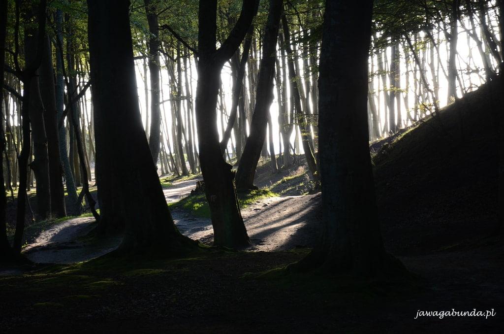 słońce świeci miedzy drzewami