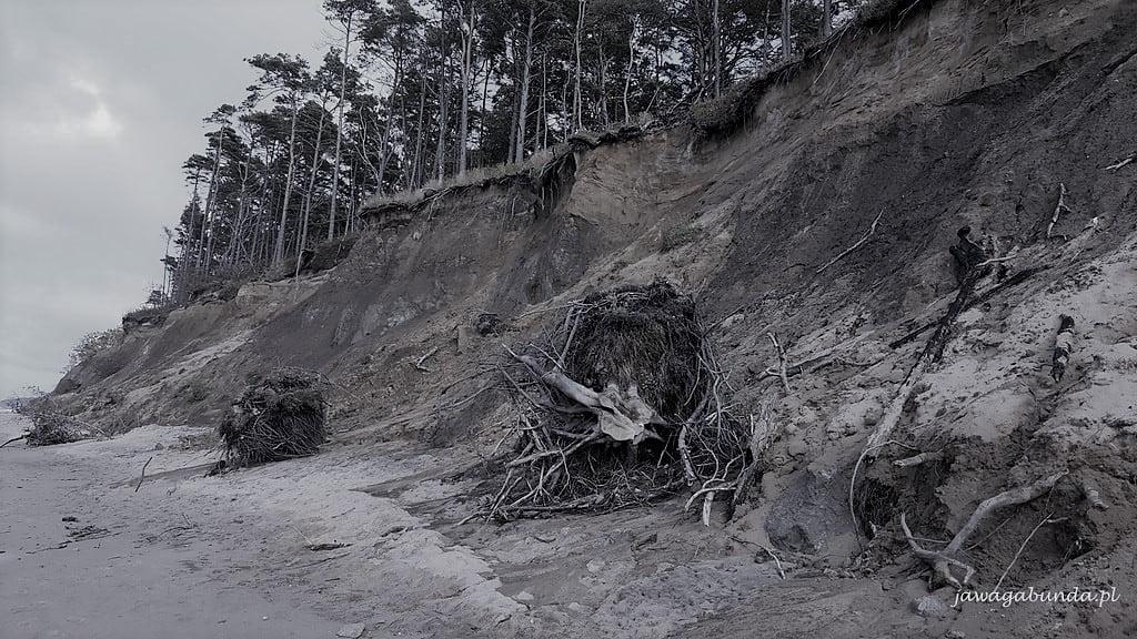 stromy brzeg morza