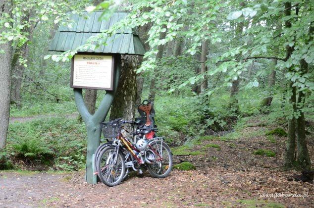 Rowery przypięte do drzewa
