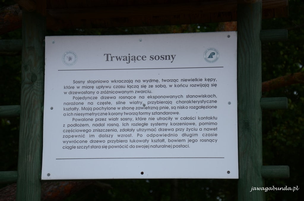 tablica informacyjna na temat sosny