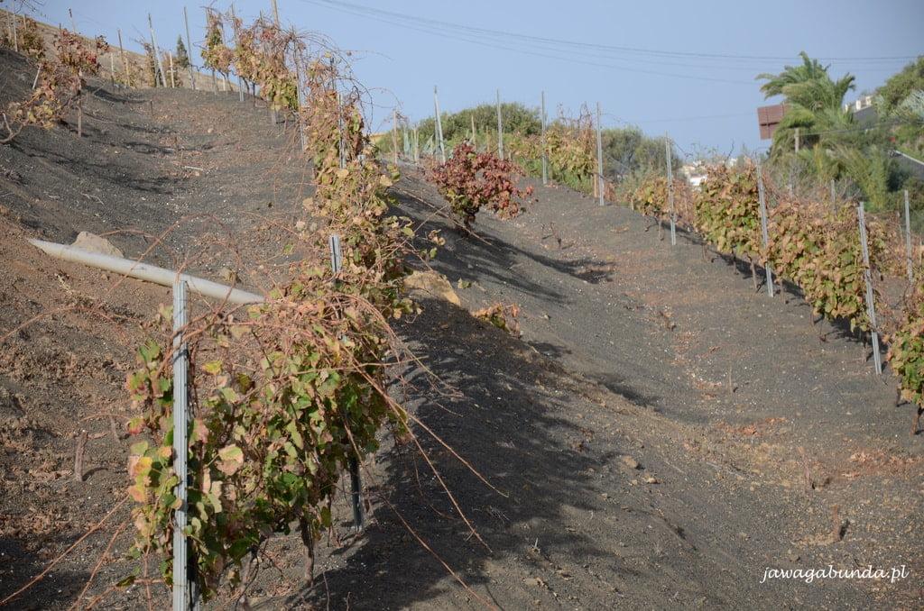 Winnice na powulkanicznym podłożu