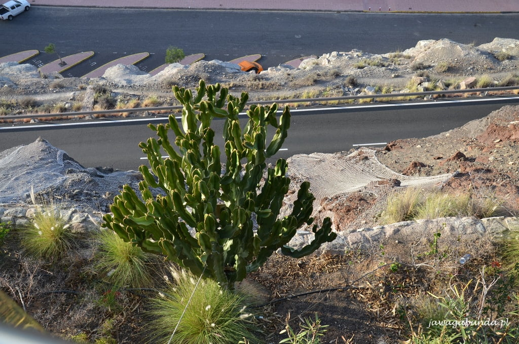 roślina na tle skał