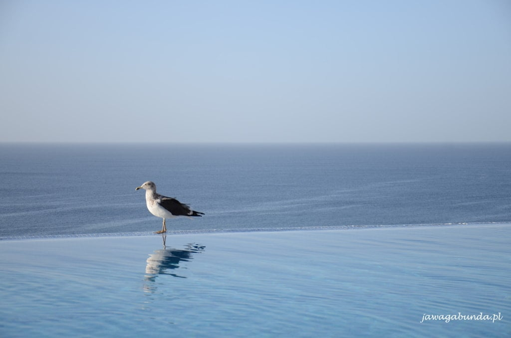 mewa stojąca na brzegu basenu