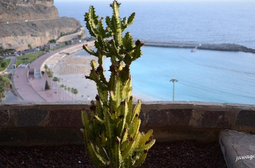 kaktus na balkonie w tyle morze