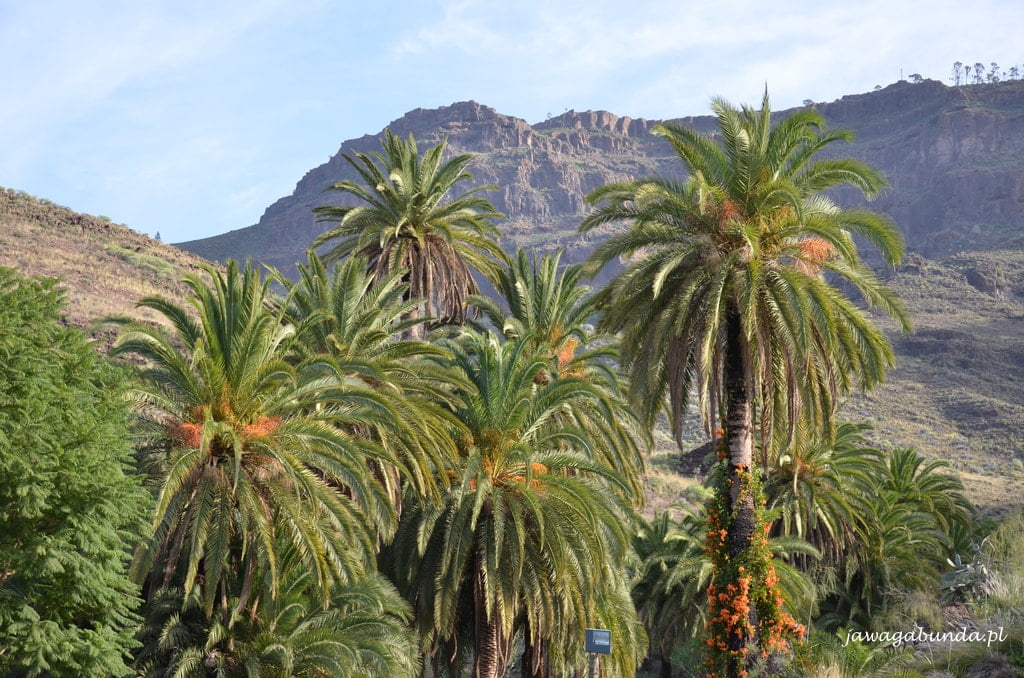 palmy i góry