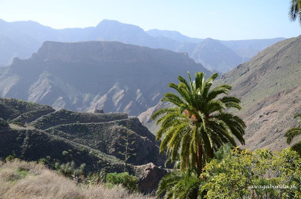 palma na tle skalistych gór